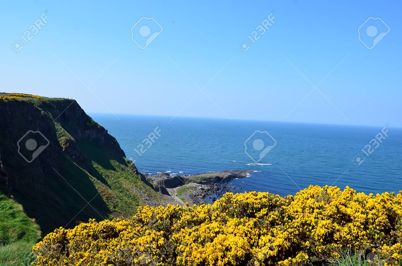 Coast Of Ireland With Sea And Cliffs And Yellow Flowers Stock Photo