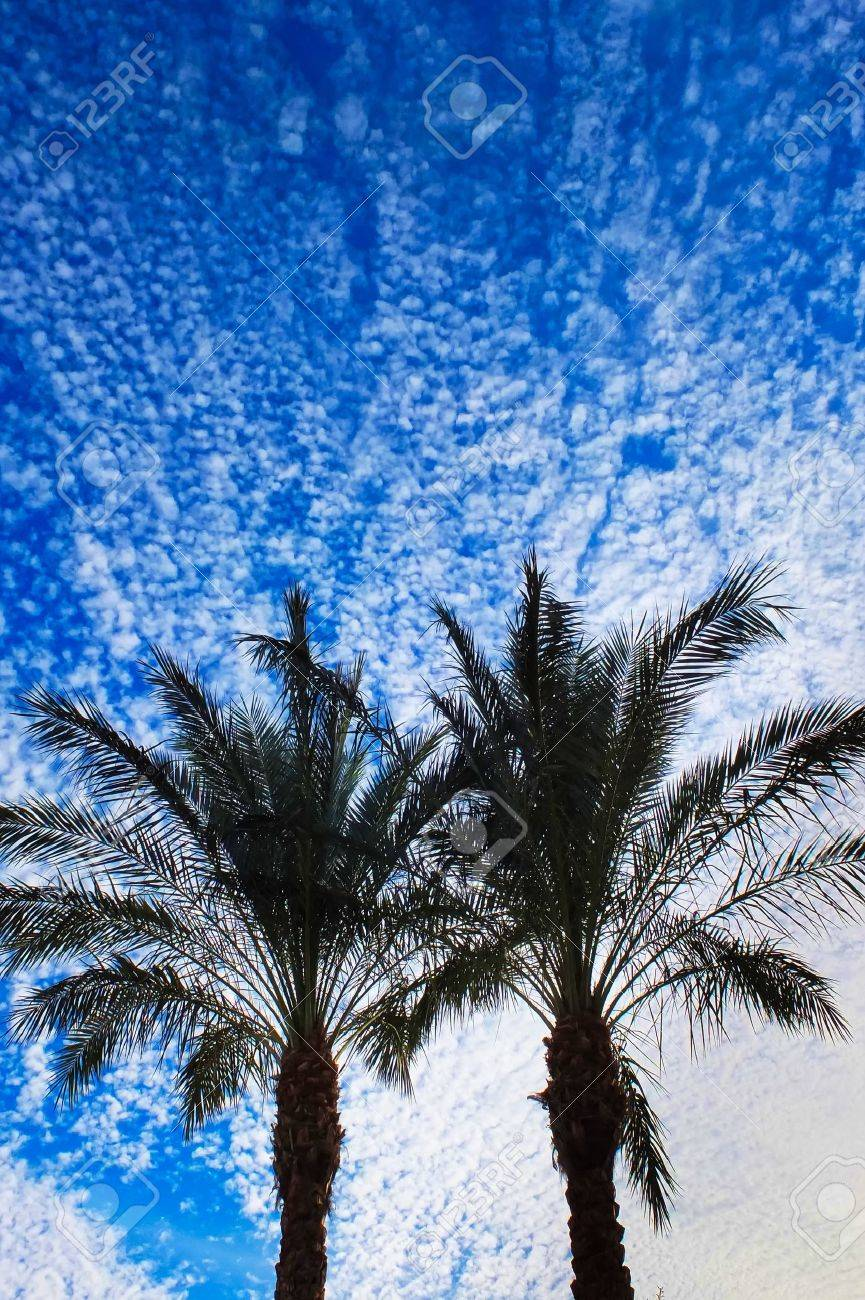 Palm Trees Background Vertical Palm Trees Vertical on Blue