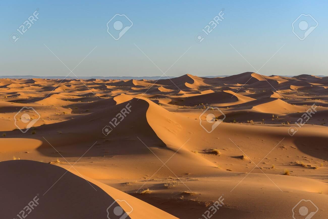 Dunes in the desert of Sahara, Morocco. - 115998459