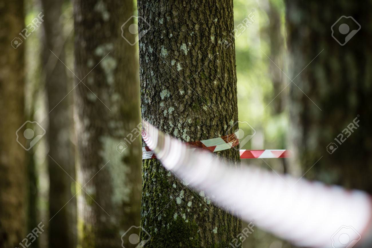 Kletterausrüstung Baum : Baumkletterausrüstung im wald mit slacklines und halterungen
