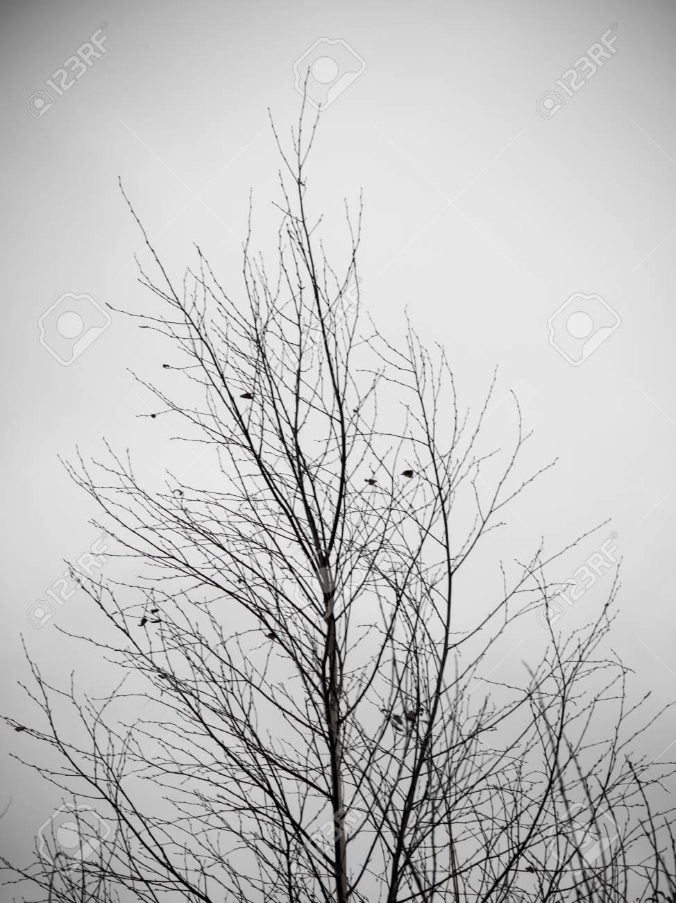 Immagini Stock - Rami Secchi E Piante Secchi Su Sfondo Bianco. Aspetto  Vintage Retrò Aspetto Retrò Image 77670409.
