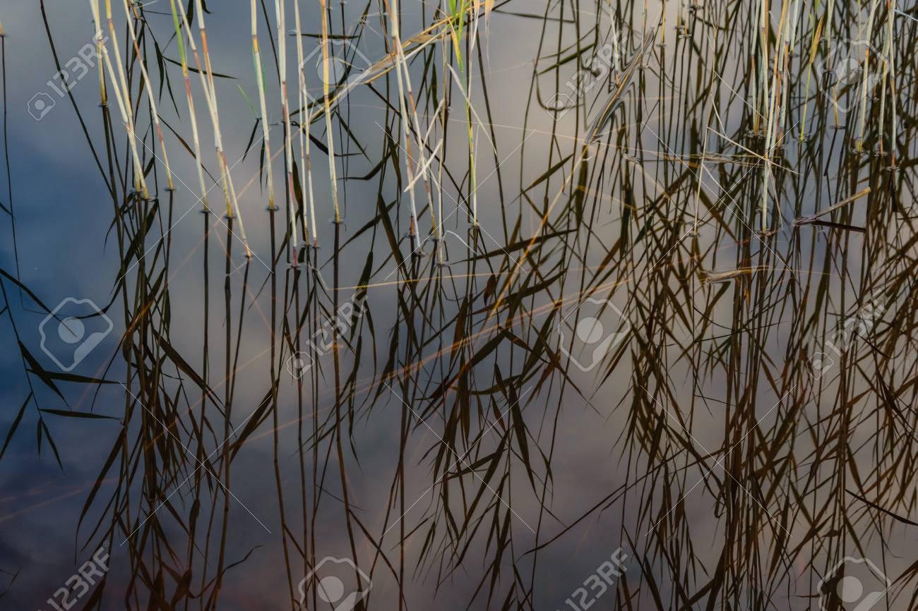 青空に白い雲と前景の水草とカラフルな秋の日に水の反射と湖 の写真 ...