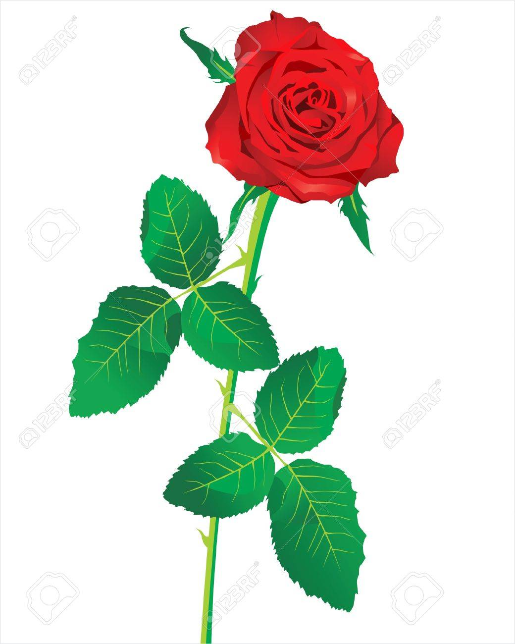 red rose Stock Vector - 14270310