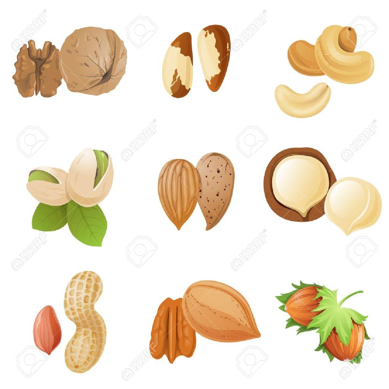 Pecan Nut Clip Art – Clipart Download