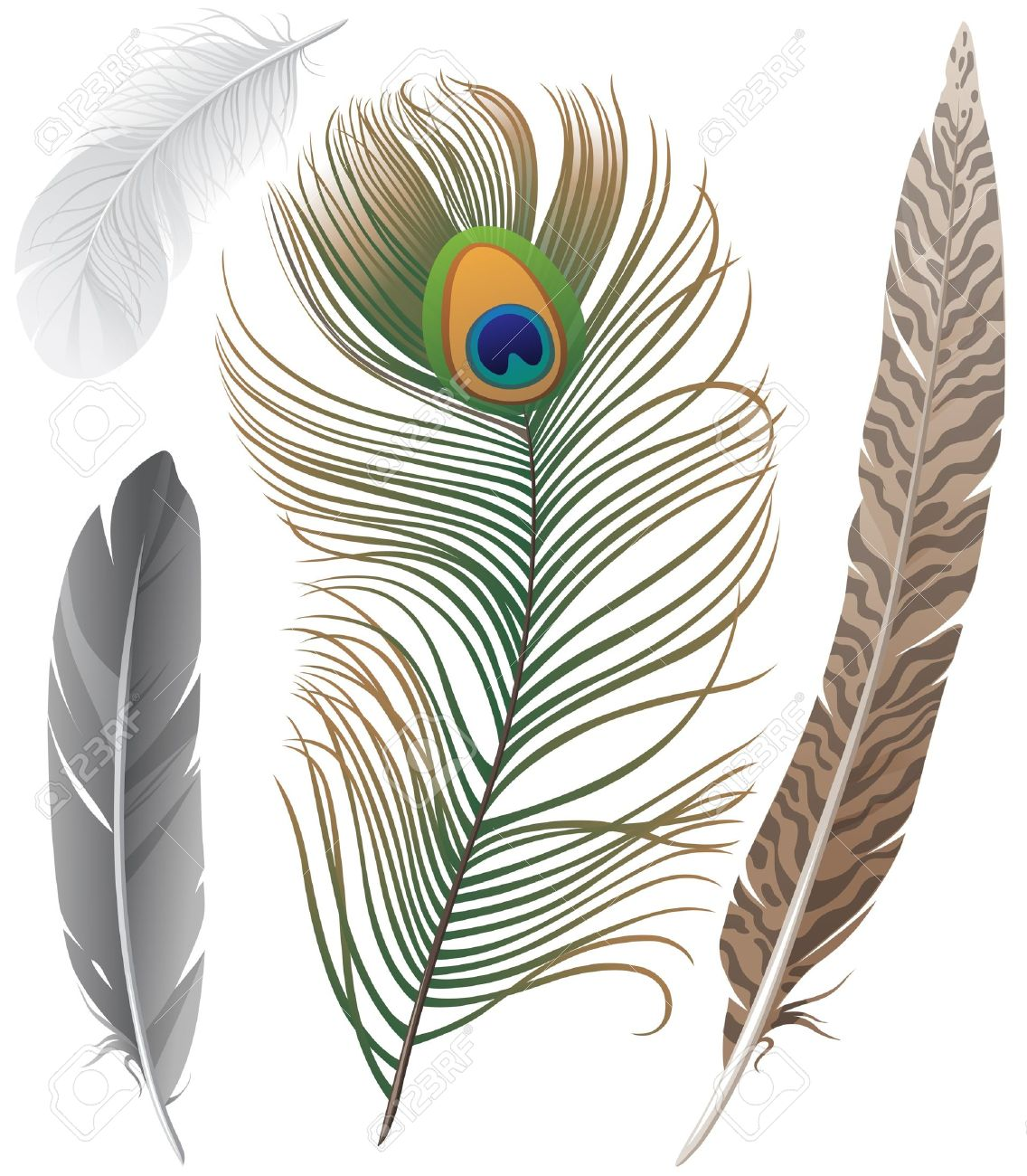 Close-up of 4 bird feathers Stock Vector - 14948374
