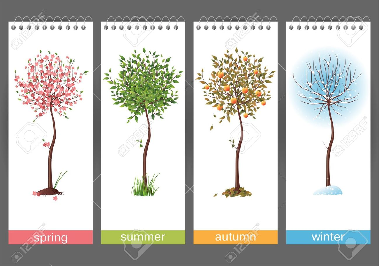 Small tree in 4 different seasons Stock Vector - 17242839