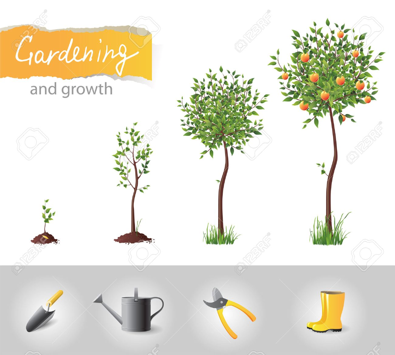 Growing fruit tree and gardening icons - 17242836