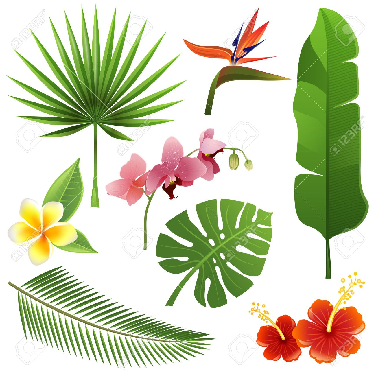 Set Of Tropical Leaves And Flowers Royalty Free Cliparts Vectors And Stock Illustration Image 22810833 Tropical flower leaves, tropic jungle plants and exotic floral branch vector. set of tropical leaves and flowers