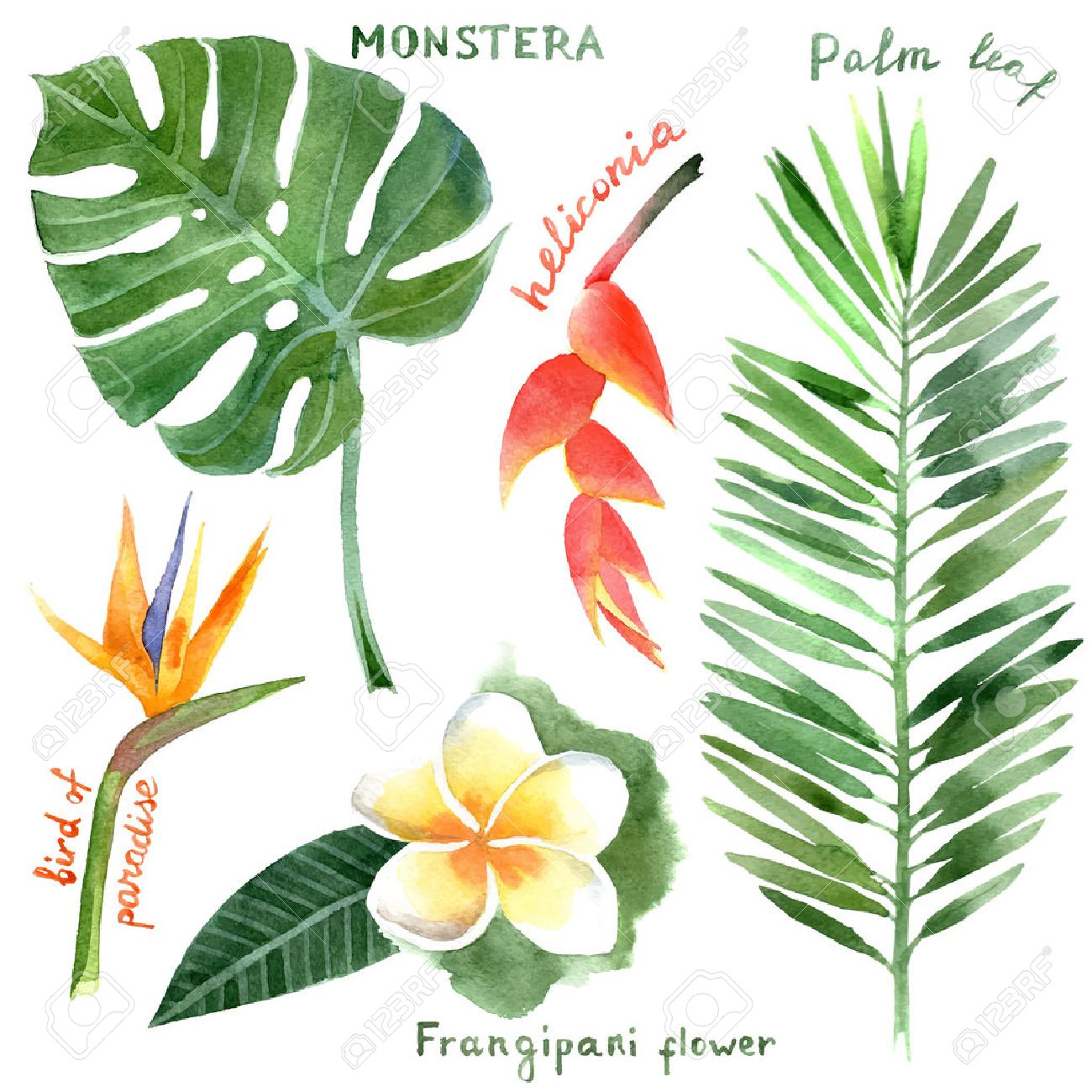 hand drawn watercolor tropical plants - 33817427