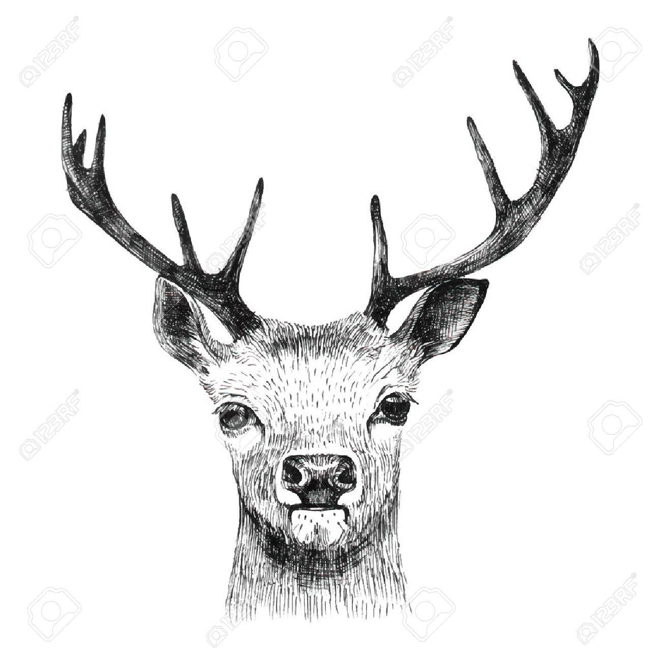 Hand drawn deer on white background - 42020420