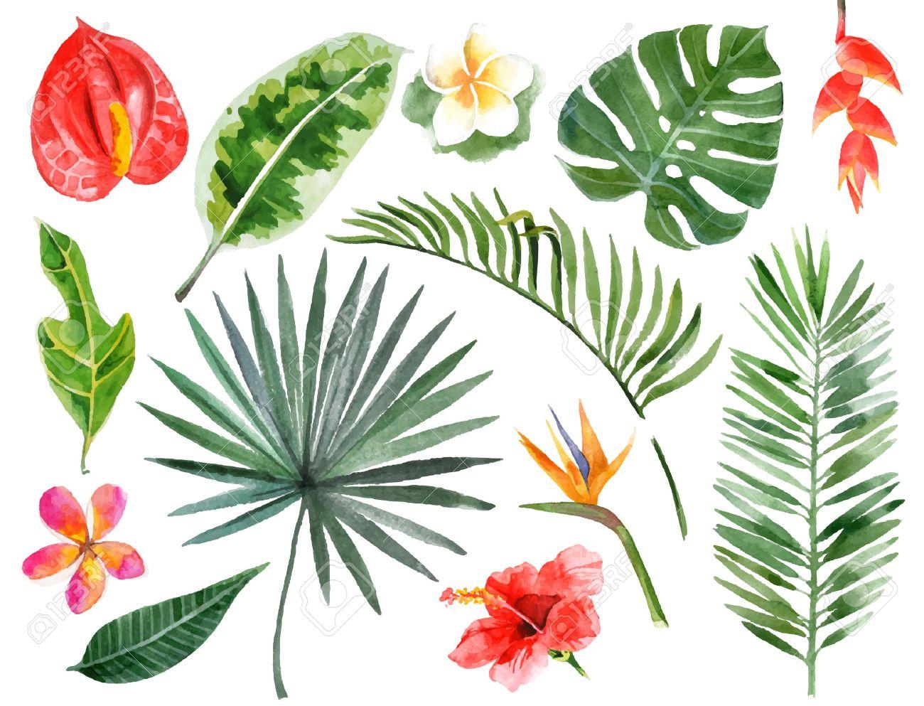 Large hand drawn watercolor tropical plants set - 42021896