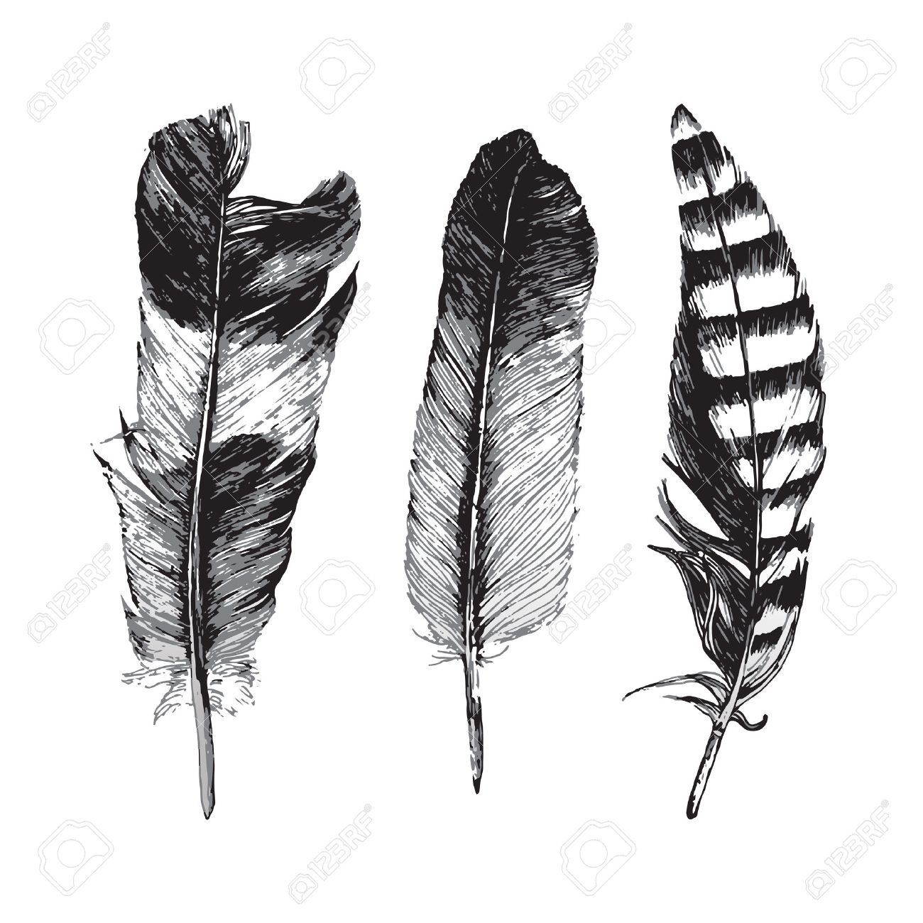 3 hand drawn feathers on white background - 43870906