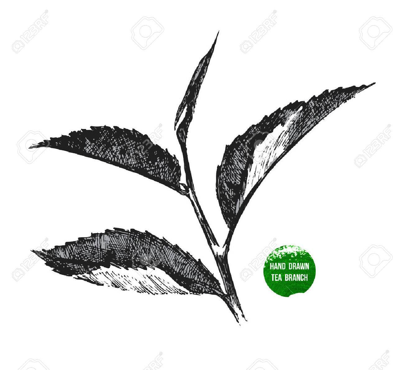 hand drawn tea leaf on white background - 43870997