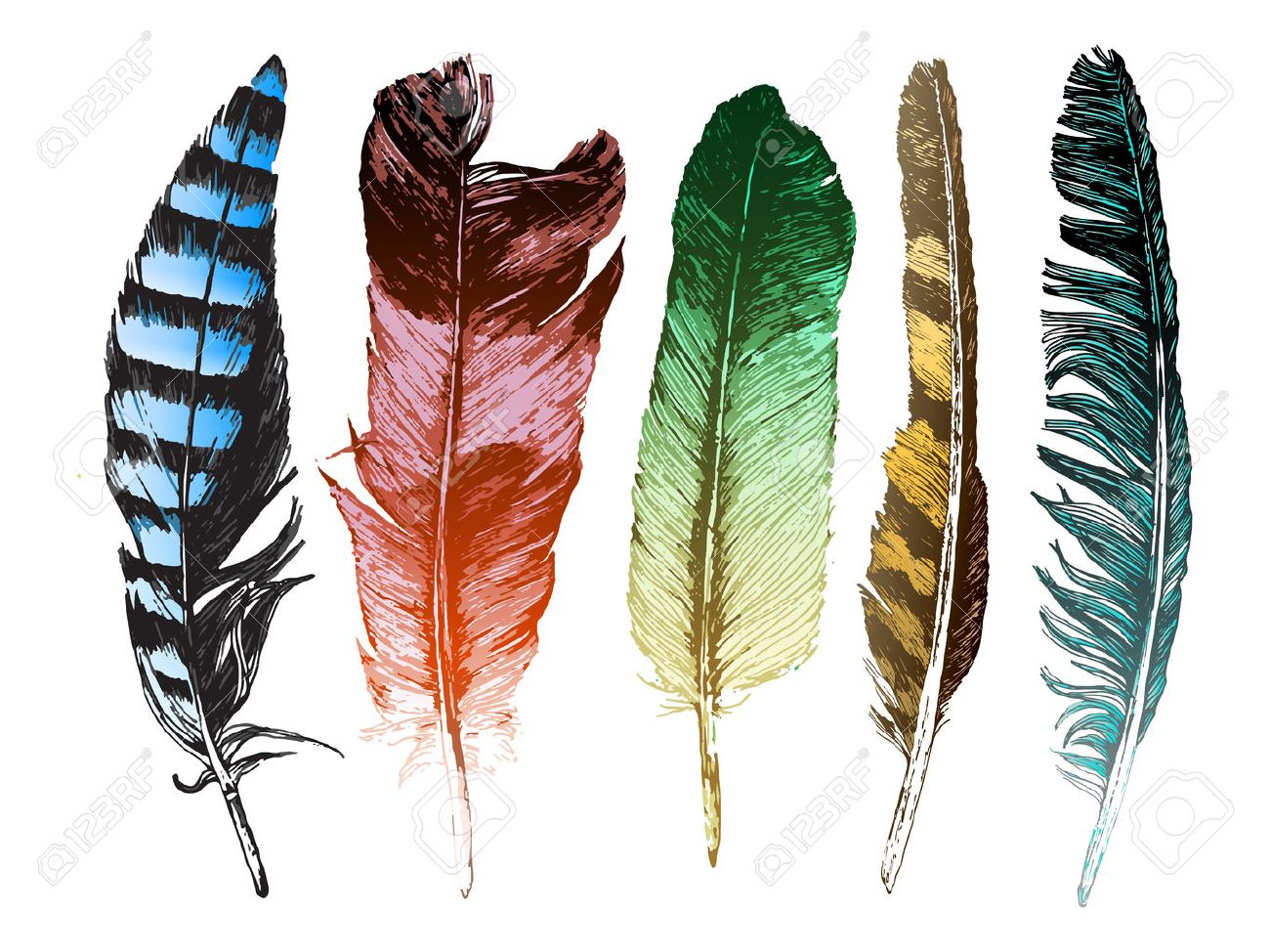 5 colorful hand drawn feathers on white background - 44033591