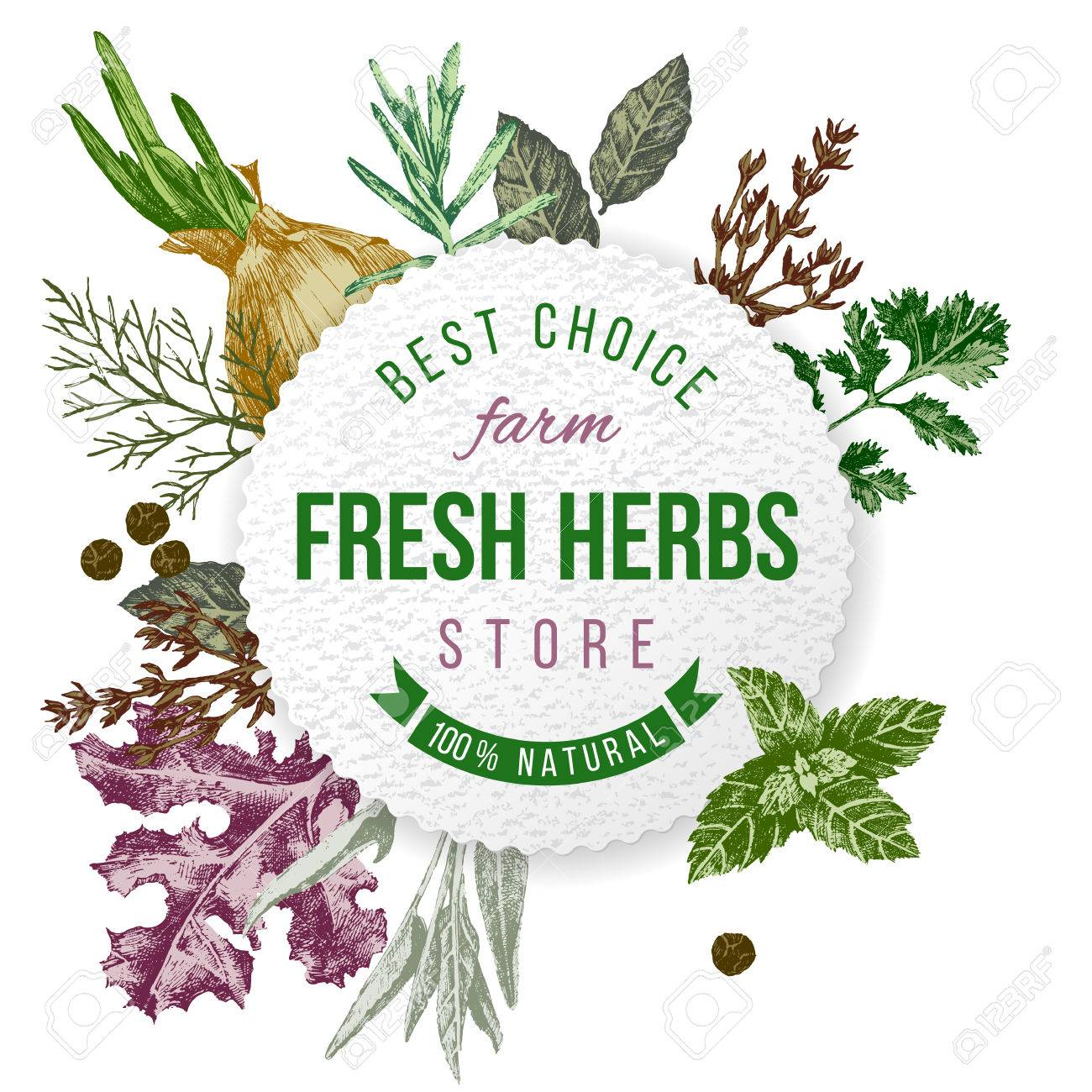 Round emblem with type design and hand drawn herbs and spices on white background - 44192924
