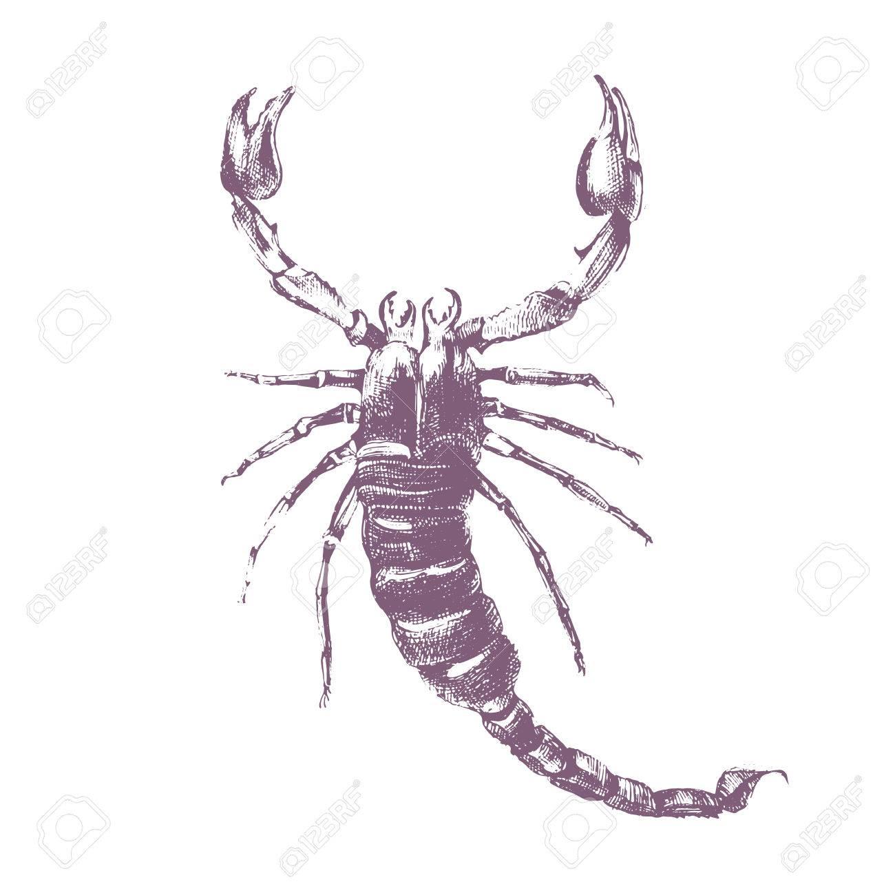 Hand Gezeichnet Skorpion Auf Weißem Hintergrund Lizenzfrei Nutzbare