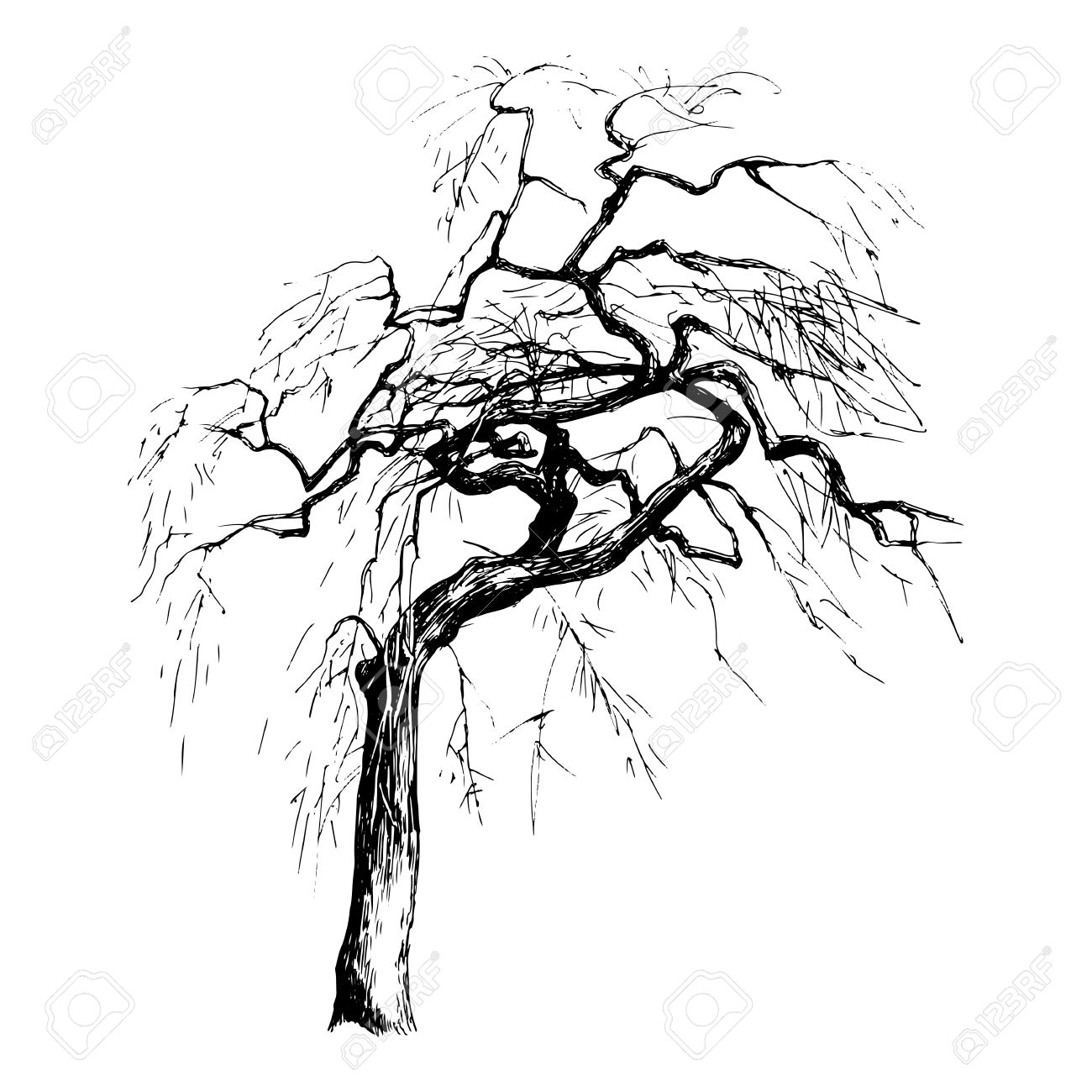 Hand drawn tree silhouette on white background - 58842940