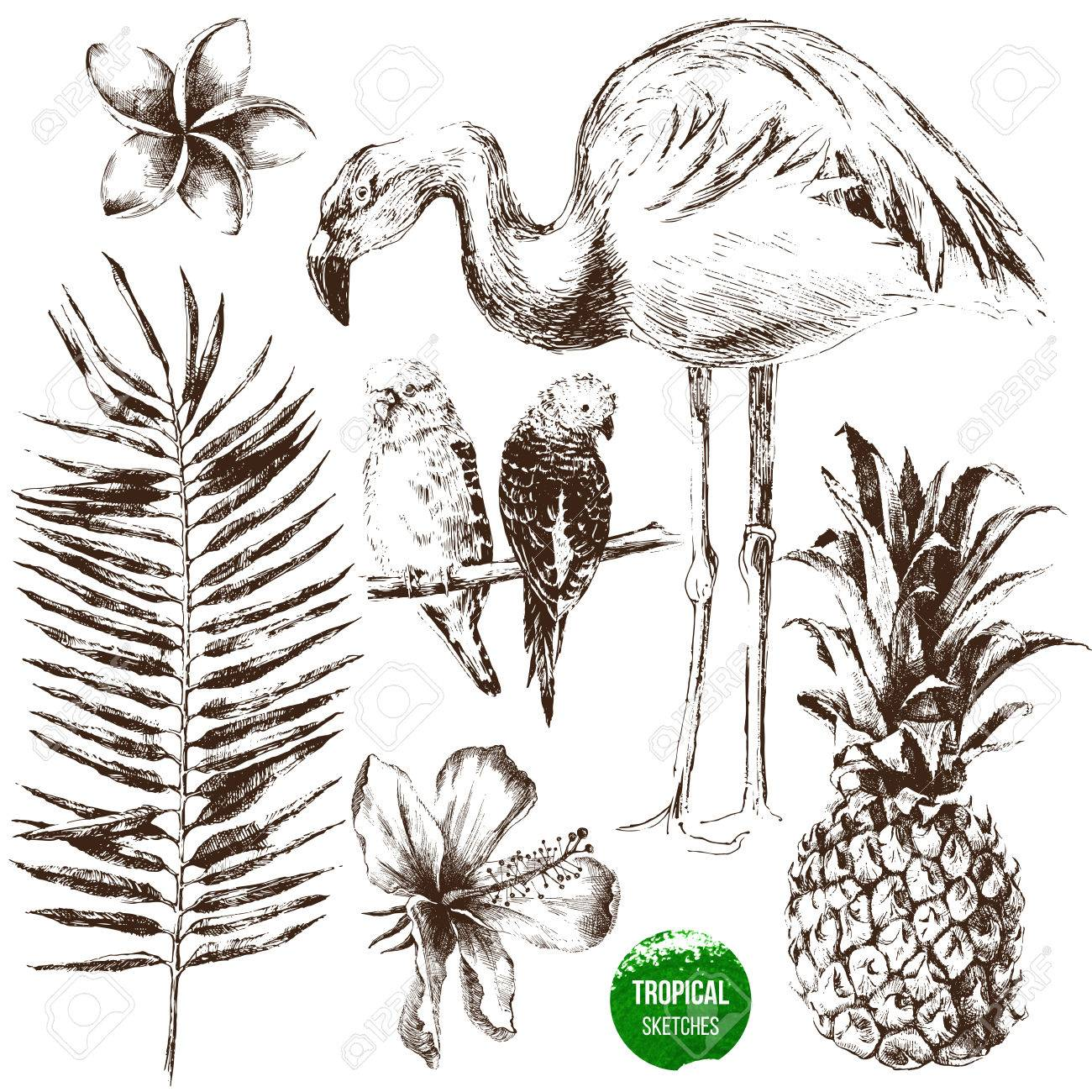 Set of highly detailed hand drawn tropical plants and birds - 58842969