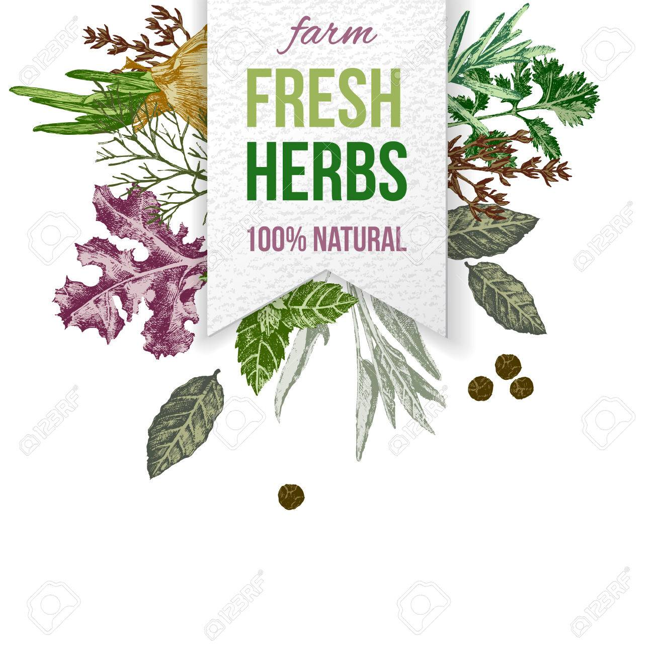 Paper emblem with type design and hand drawn herbs and spices - 58842973