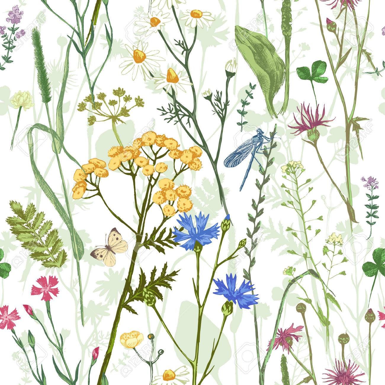 Hand drawn seamless pattern with colorful herbs and flowers - 64111339