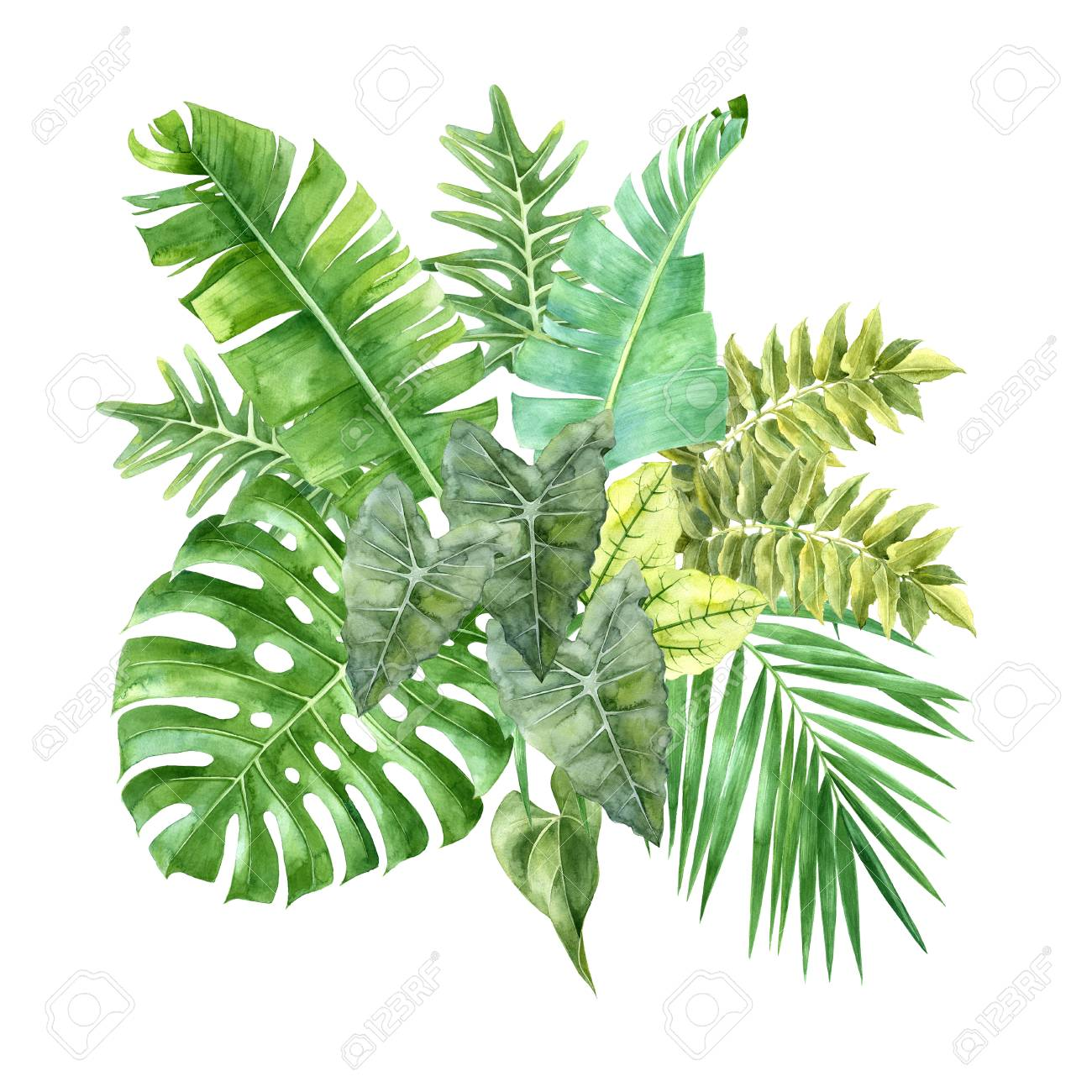Watercolor tropical leaves isolated on white background - 82920992