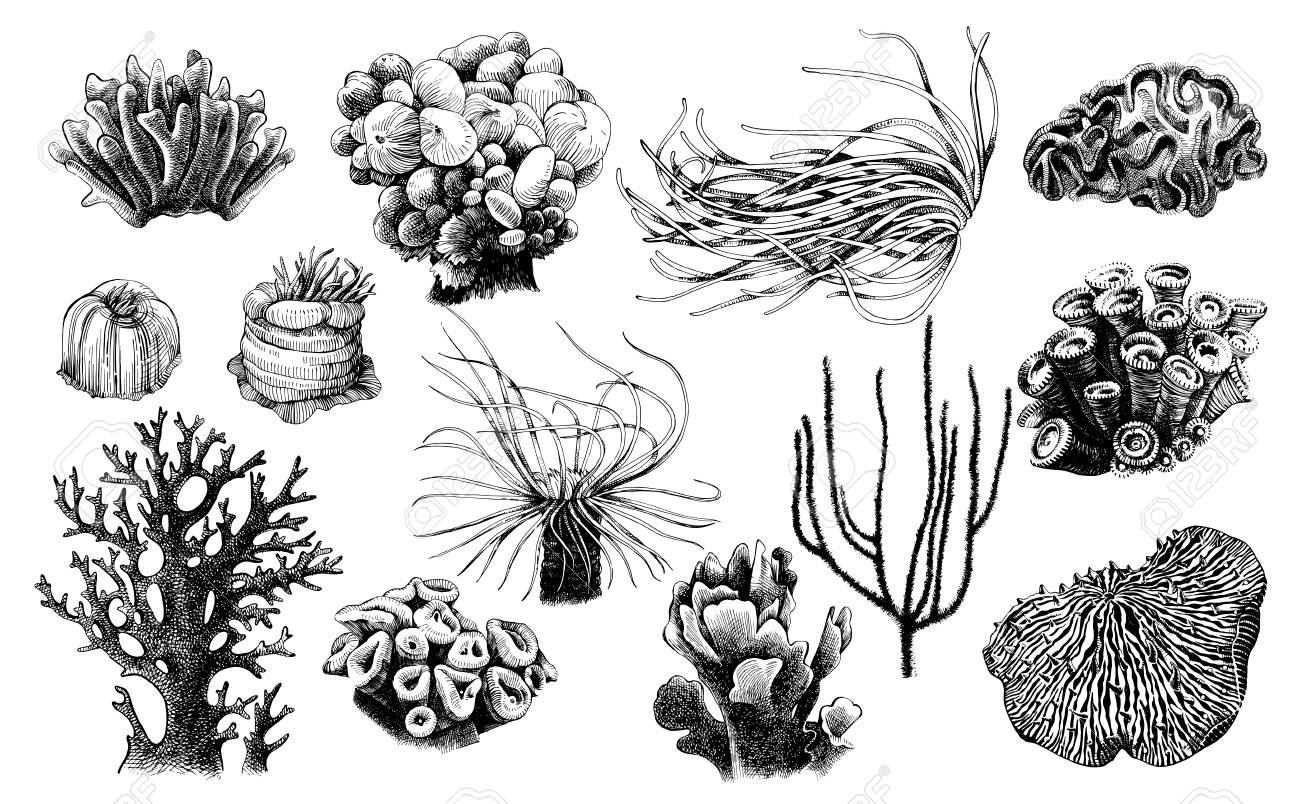 Hand drawn collection of corals reef plants - 102216806
