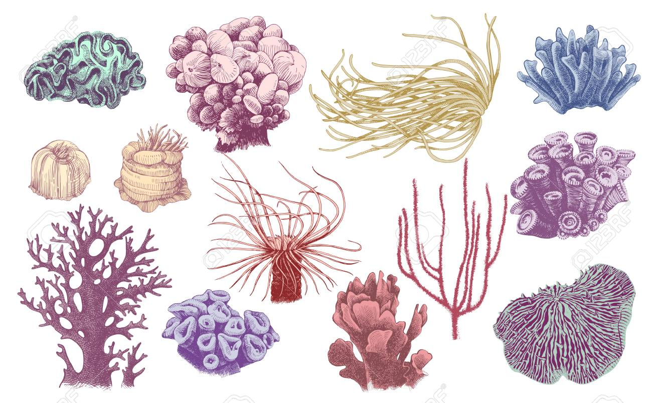 Hand drawn collection of colorful corals. Vector illustration in vintage style - 111801365