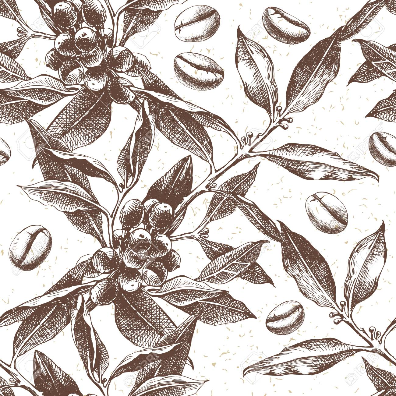 Seamles pattern with hand drawn coffee plant and beans. vector illustration in retro style - 111801394