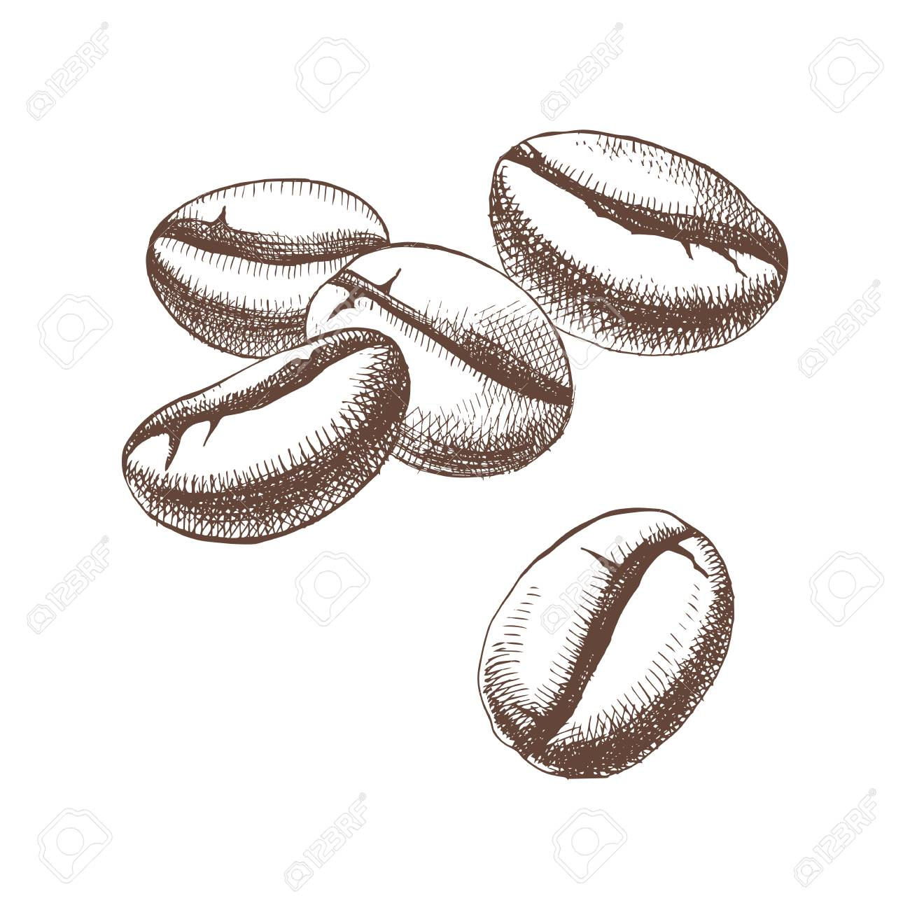 Hand sketched coffee beans - 107813961