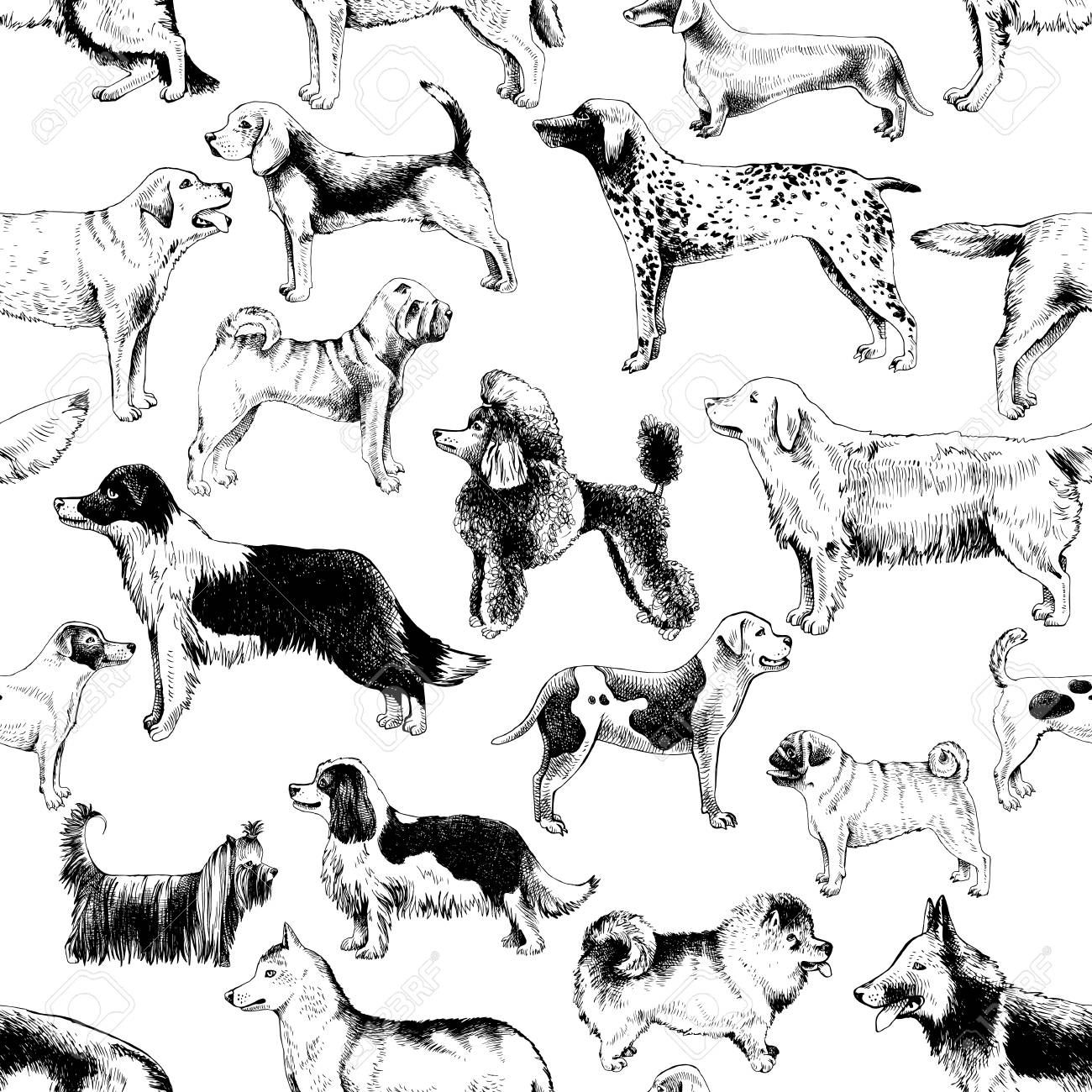Seamless pattern with dog breeds - 111438413