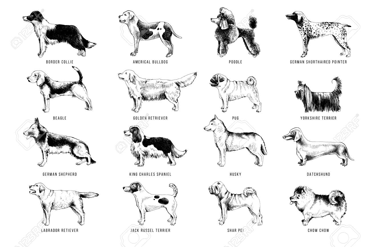 Breeds of dogs - 112656503