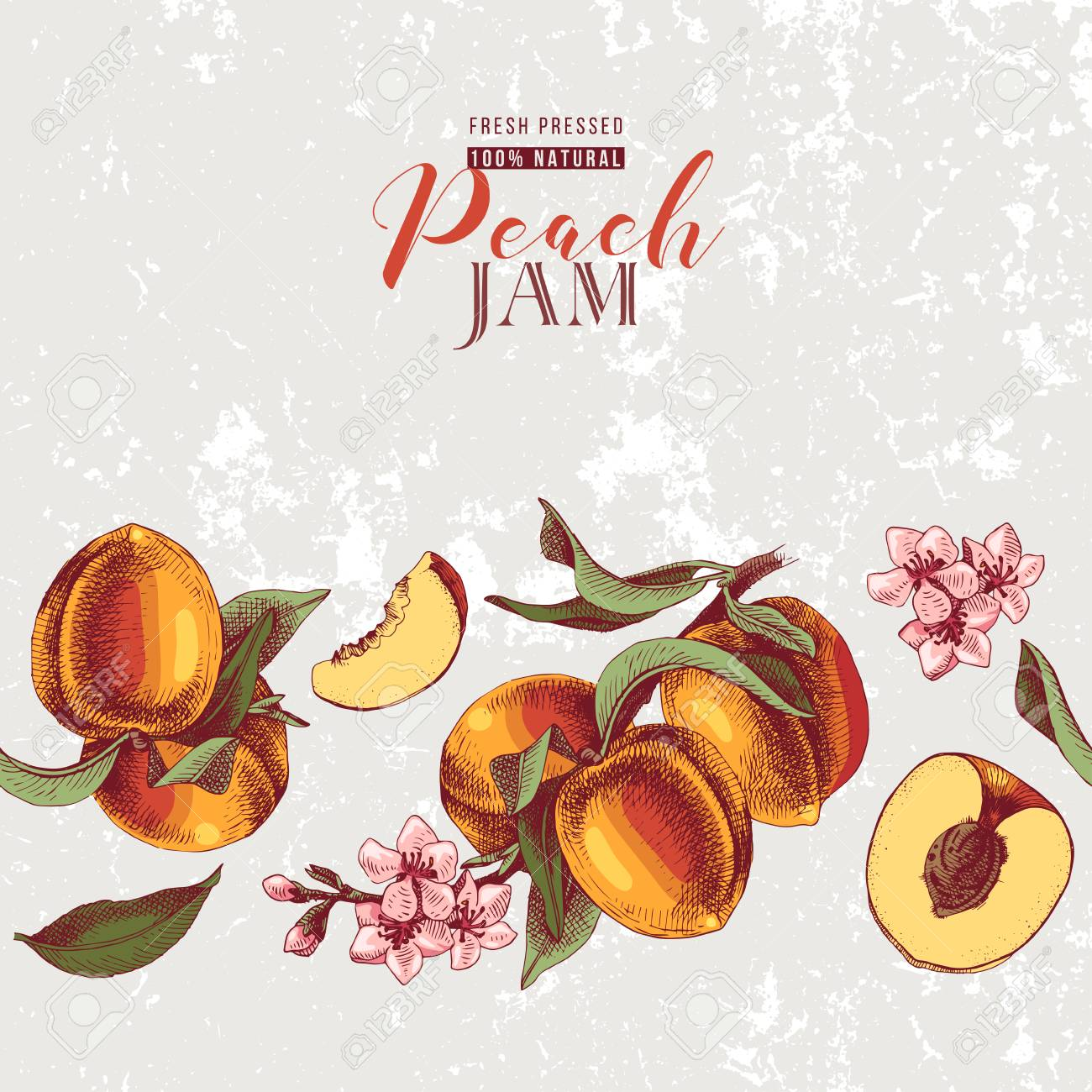 Background with hand drawn peach seamless border in vintage style. Vector illustration - 126871337