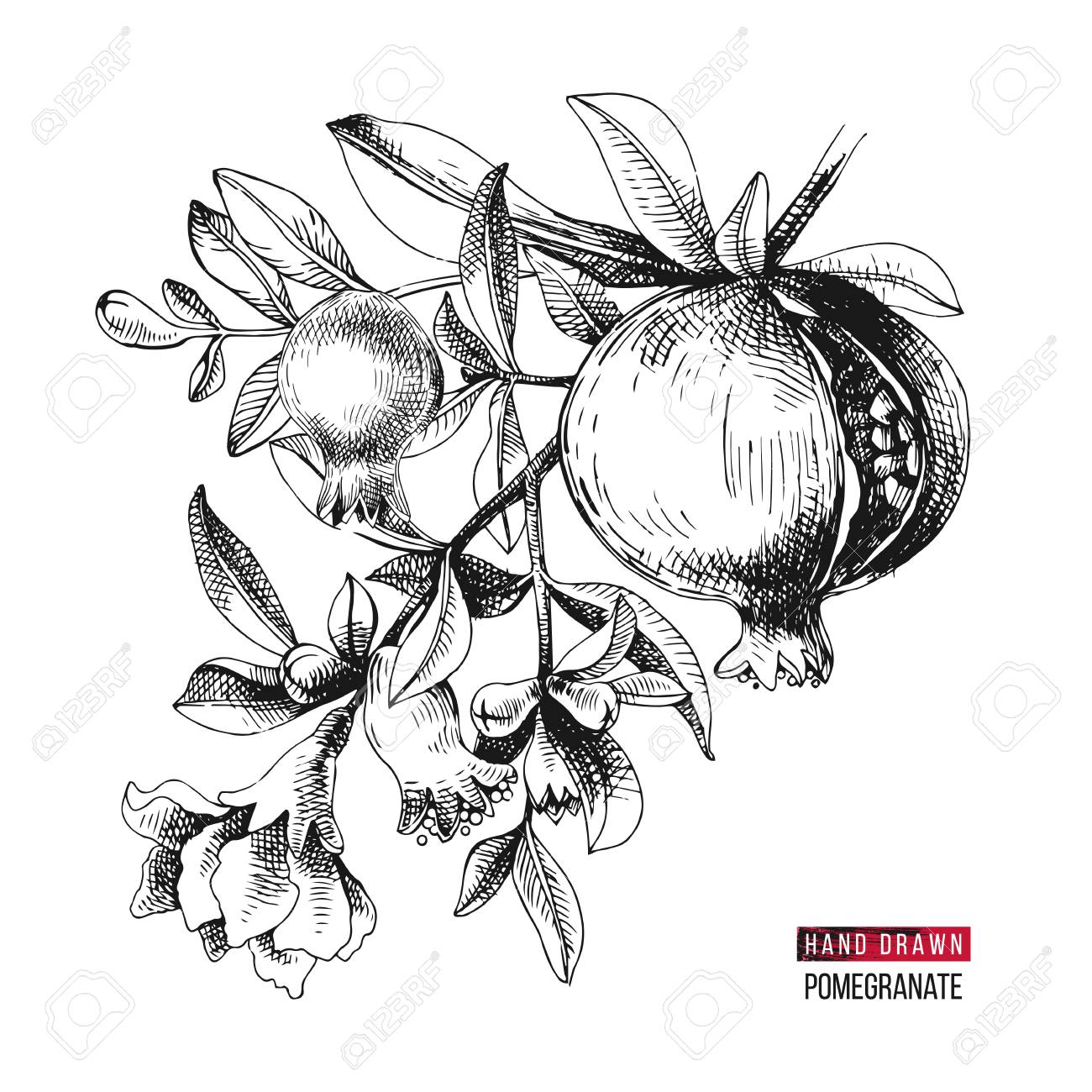 Hand drawn pomegranate branch with flowers and fruits. Vector illustration - 126871366