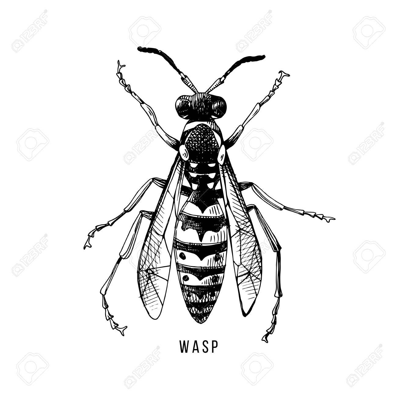 Hand drawn wasp illustration - 117674709