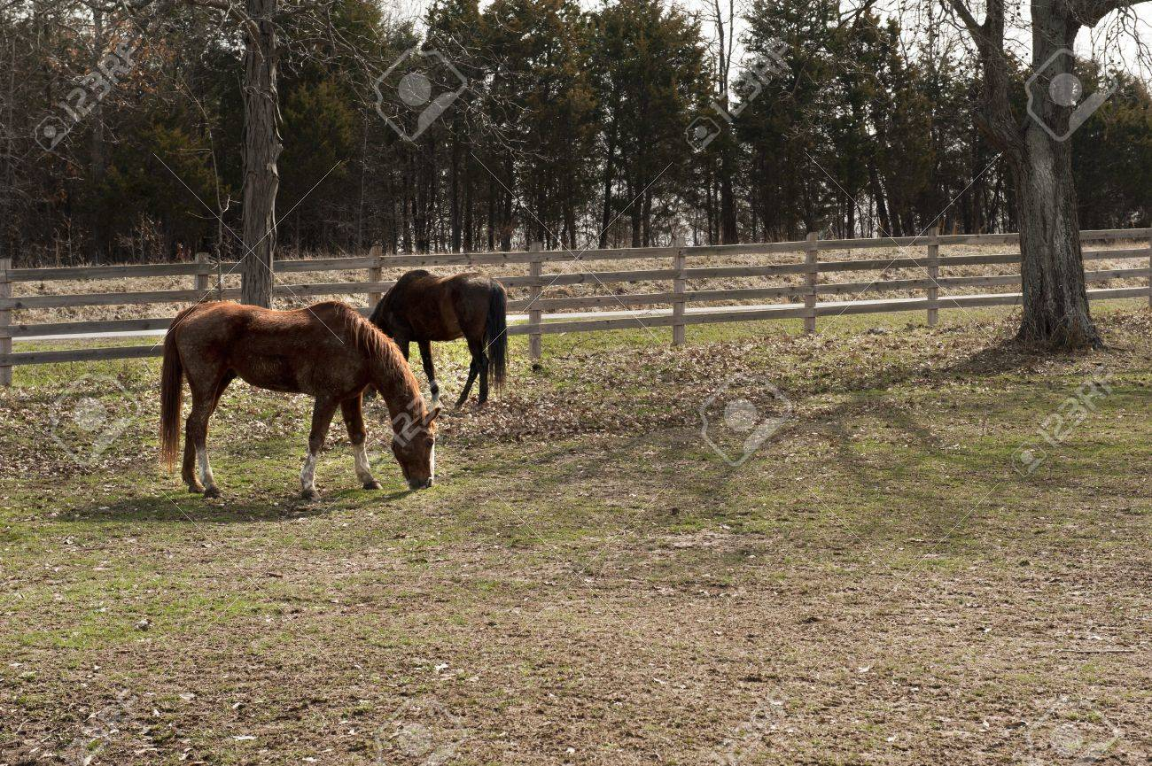 Two dirty horses in a peaceful fenced in yard Stock Photo - 9142872