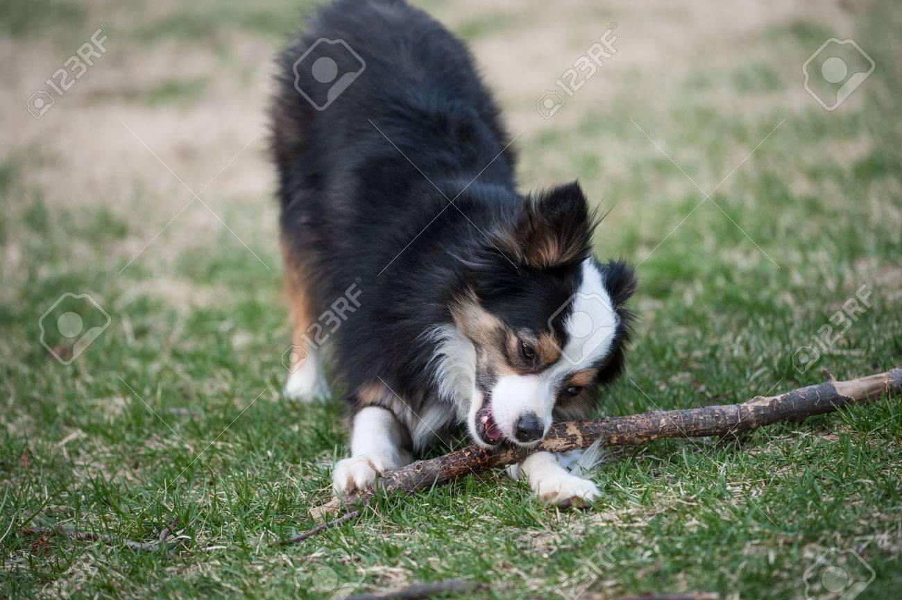Large stick