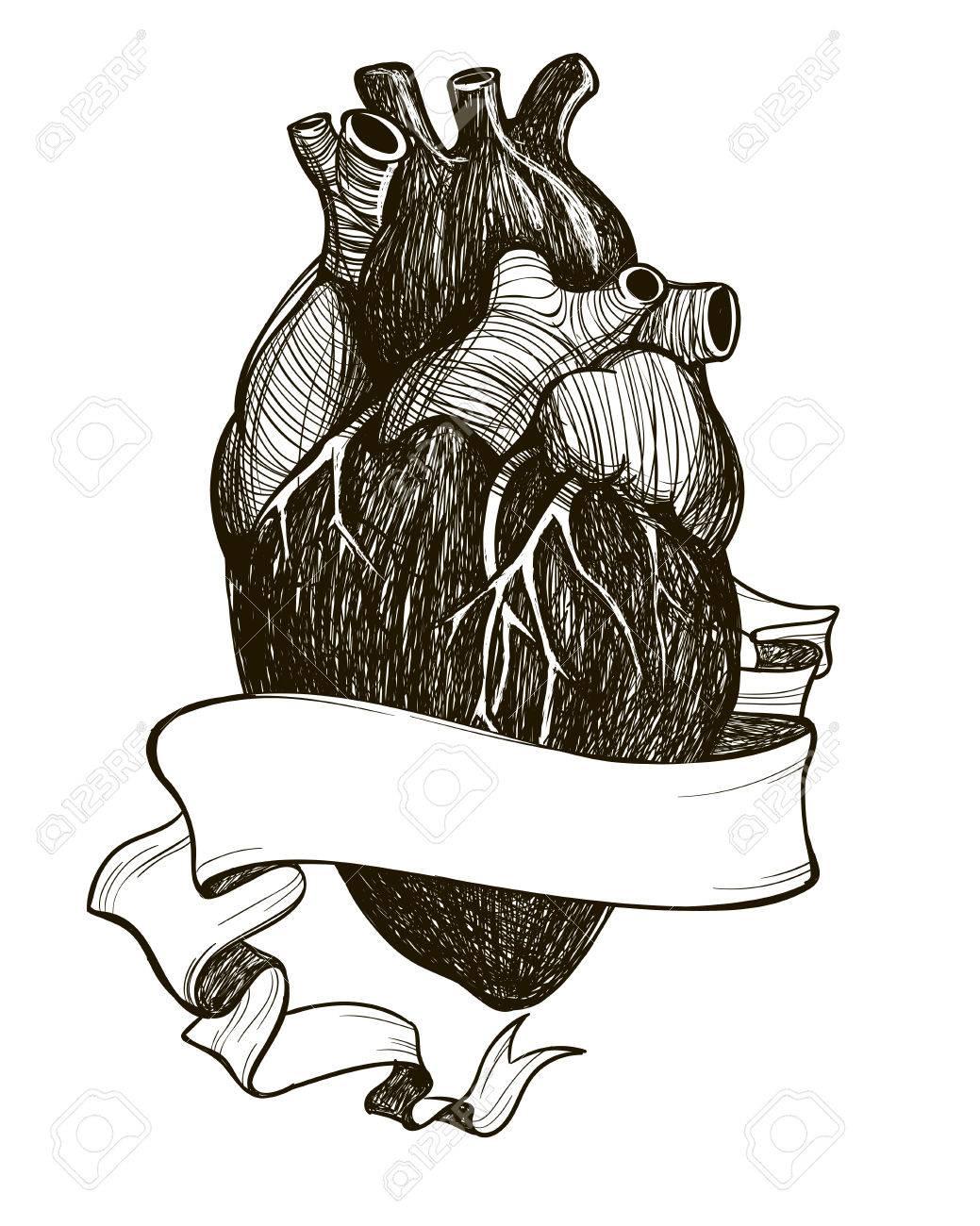 Menschliches Anatomisches Herz Mit Band Auf Weißem Hintergrund ...