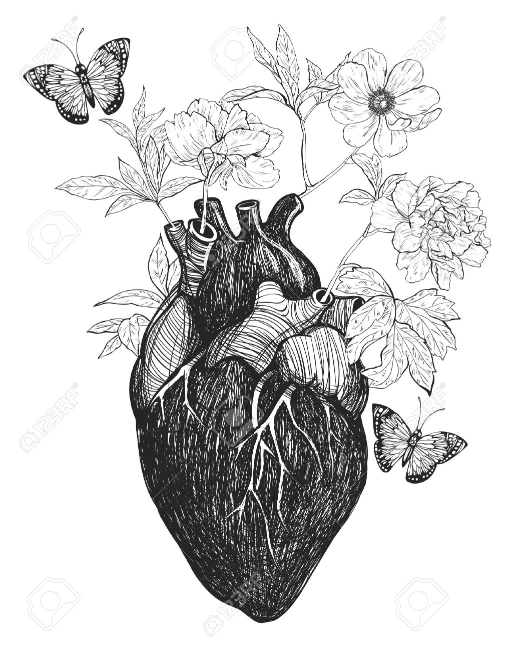 Human Anatomical Heart With Flowers Isolated On White Background