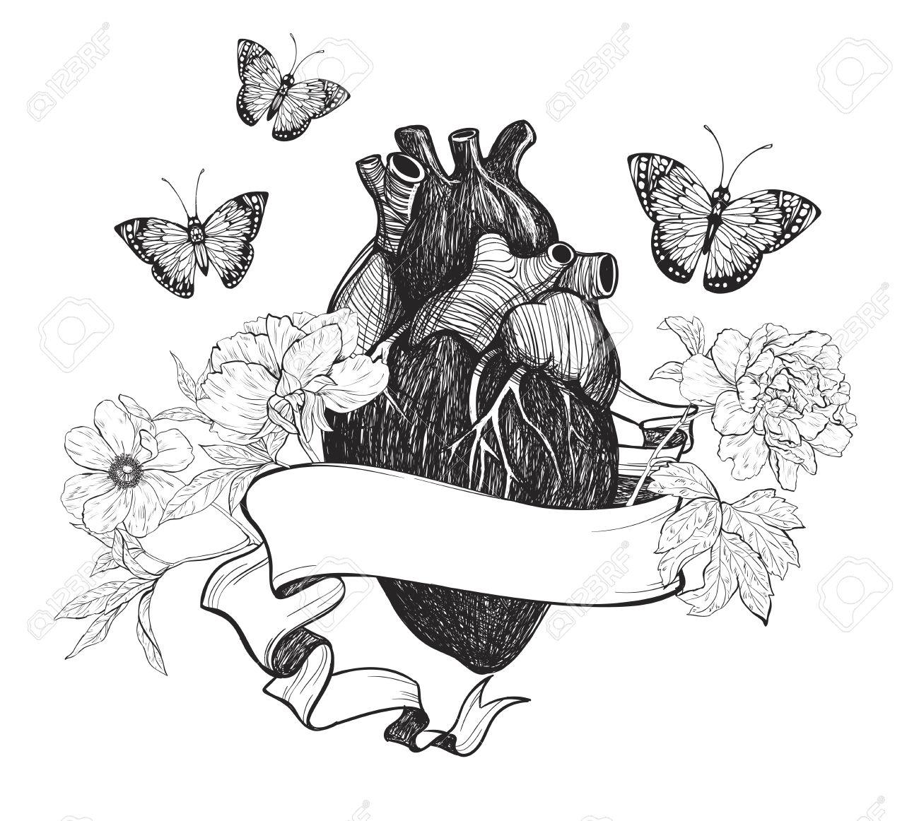 Anatómica Del Corazón Humano Con Flores, Cintas Y La Mariposa ...