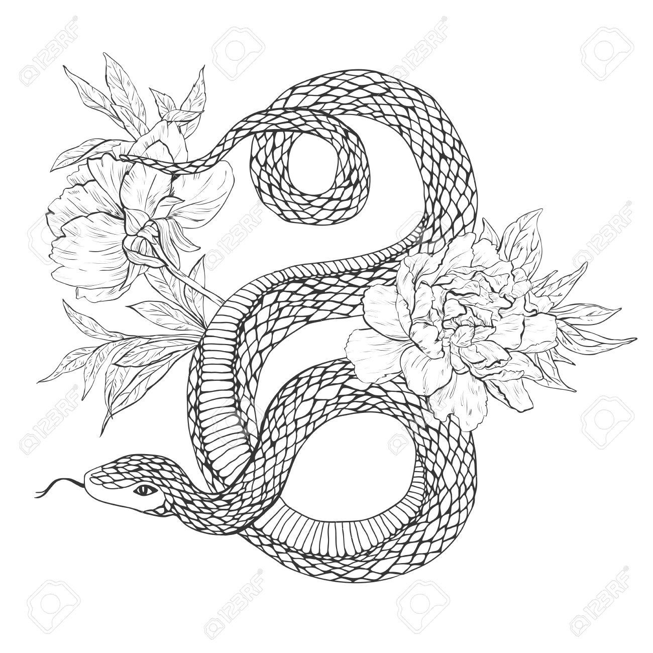 Snakes And Flowers Tattoo Art Coloring Books Vintage Illustration Isolated On White Background
