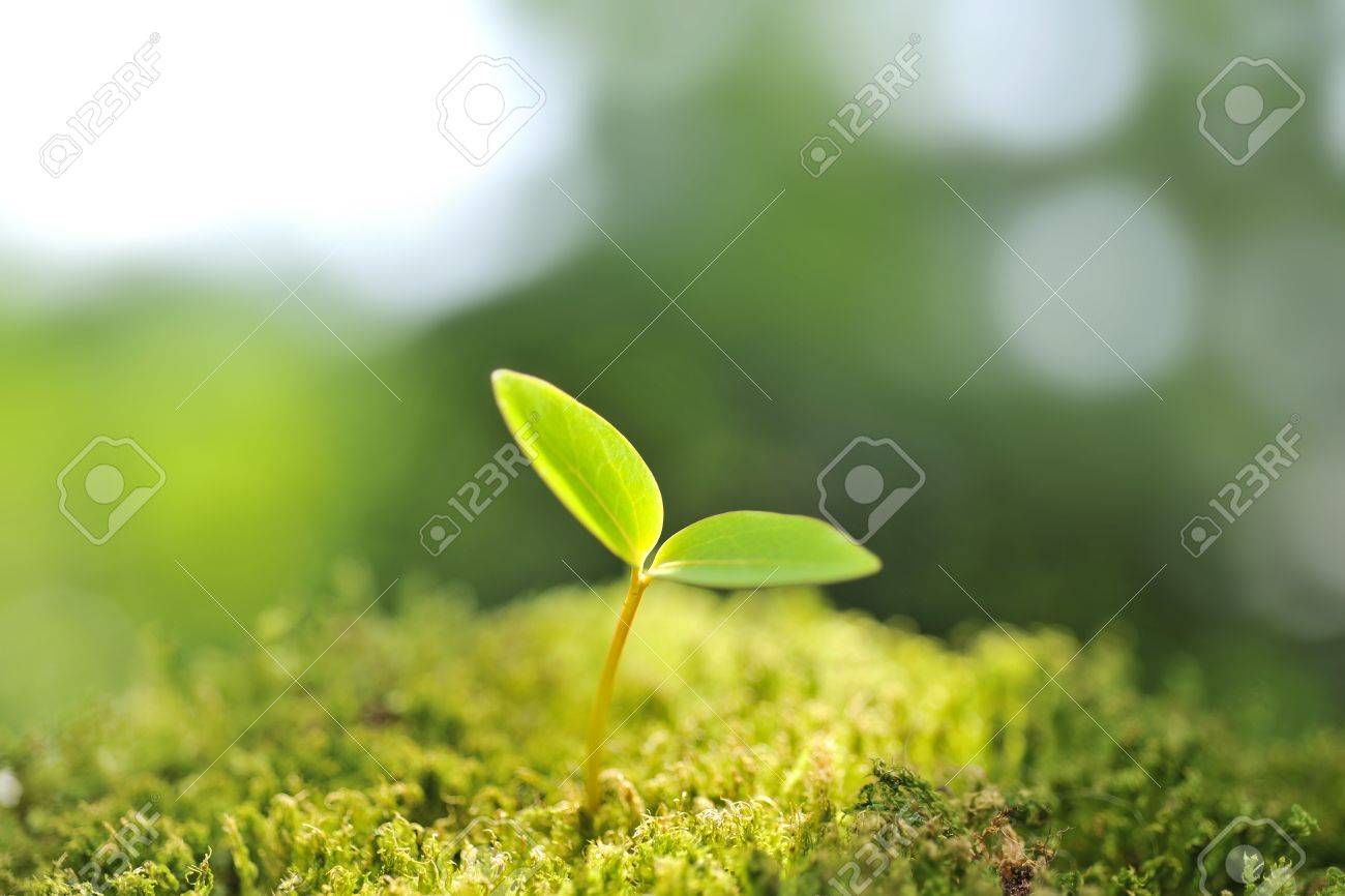 Green seedling of new life concept Stock Photo - 16327539