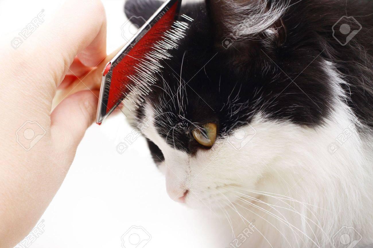 cat grooming Stock Photo - 5758331