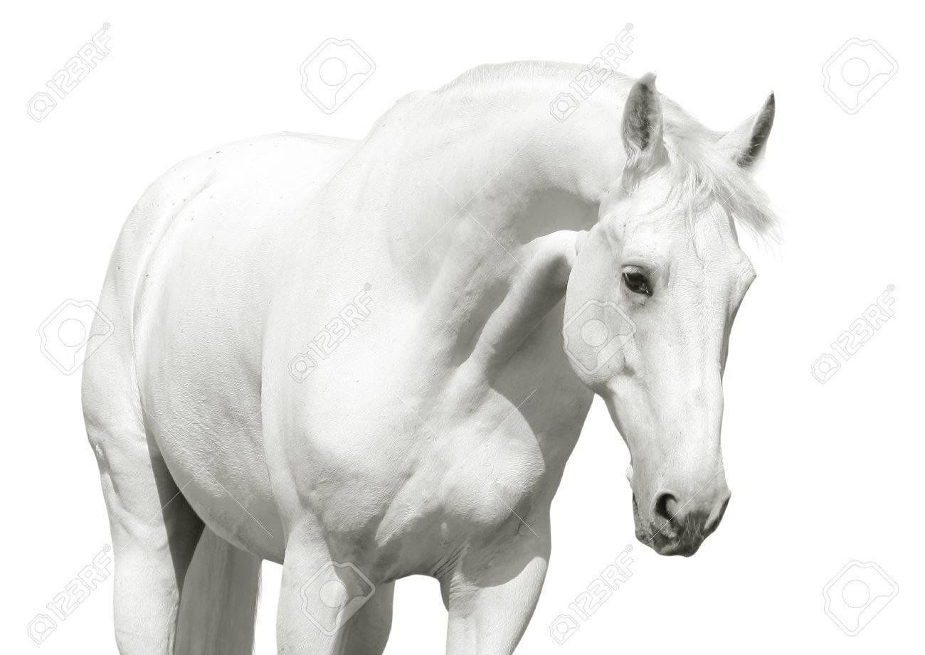 white horse high key Stock Photo - 9565617