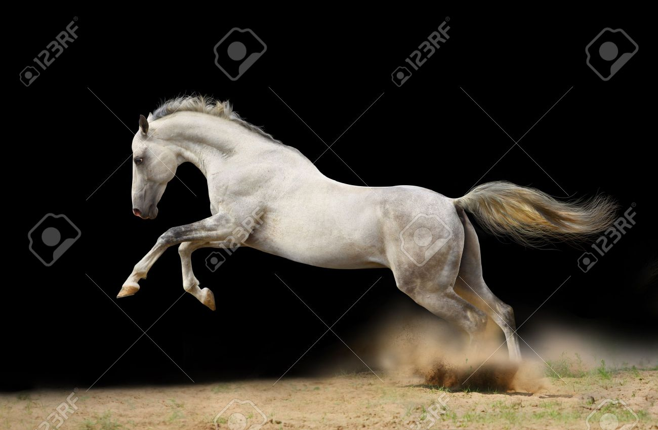silver-white stallion jumps in dust Stock Photo - 9730671