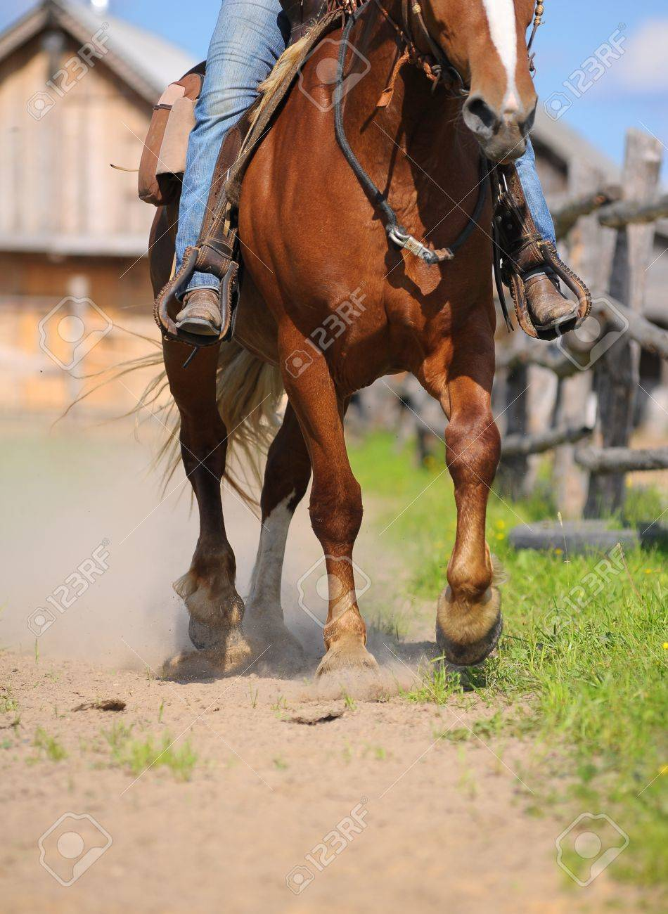 Western Horses Pictures Western Horse Riding