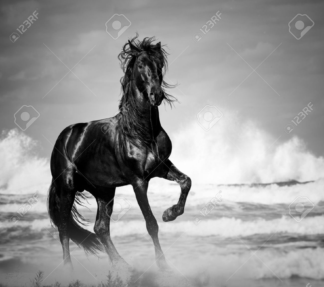 Black Stallion By The Seaside In The Wild Stock Photo Picture And Royalty Free Image Image 42890304