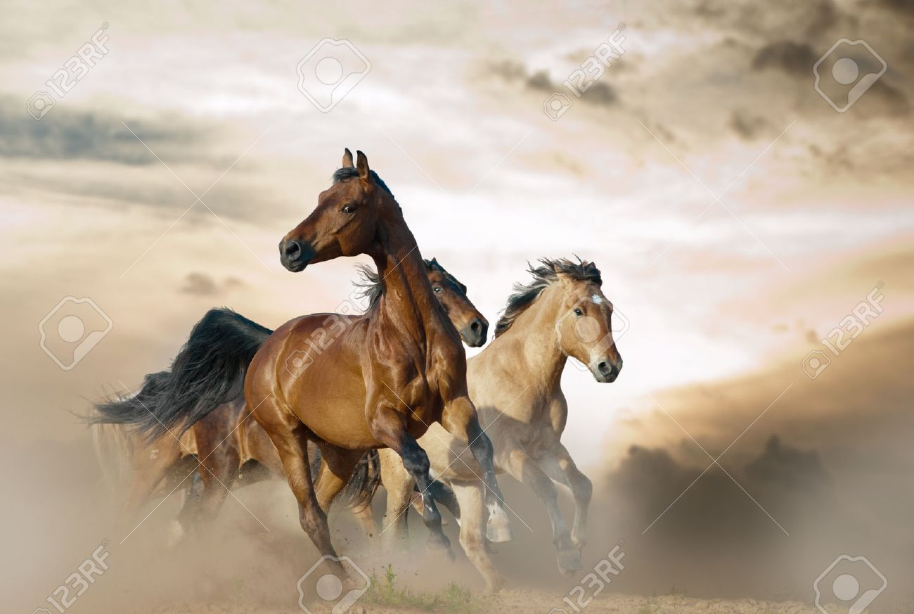 Beautiful Horses Of Different Breeds Running In Dust On Sunset Stock Photo Picture And Royalty Free Image Image 42911702