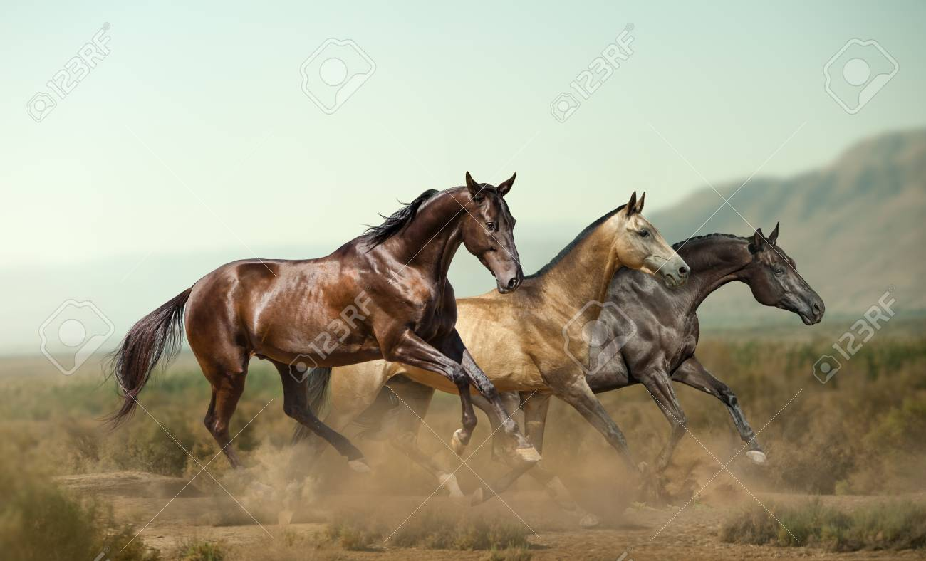 Three Beautiful Horses In Prairies On The Wild Stock Photo Picture And Royalty Free Image Image 106199236