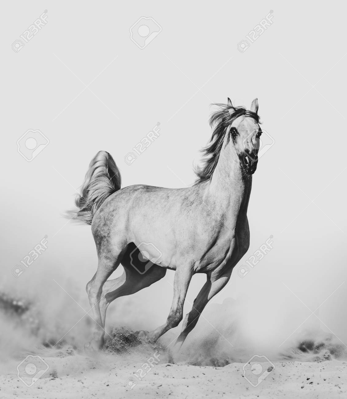 Beautiful Arabian Horse In Desert Runninf Wild Stock Photo Picture And Royalty Free Image Image 118975375