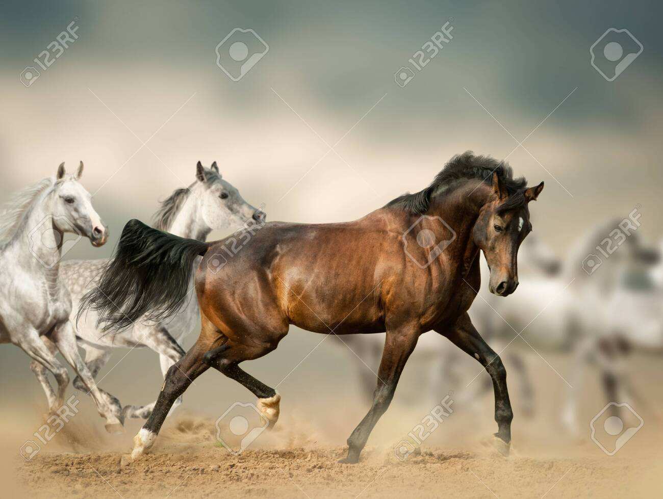 Beautiful Horses In Desert Running Wild Stock Photo Picture And Royalty Free Image Image 130005934